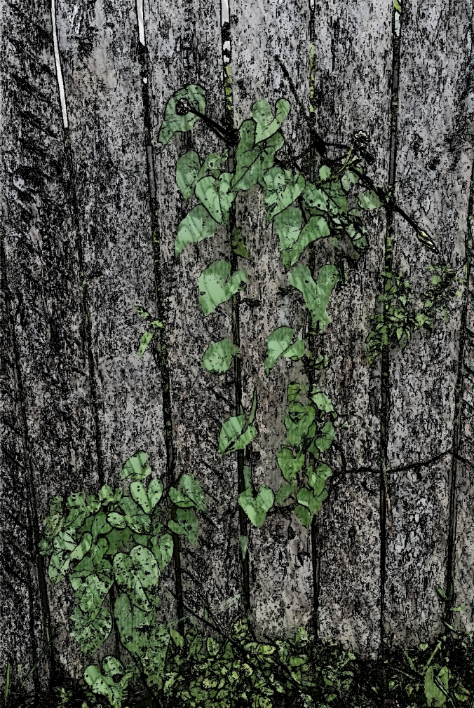 muro desenho com folhas