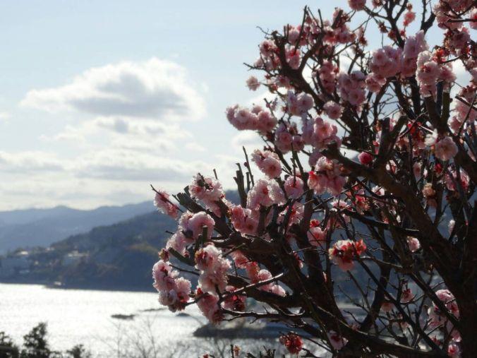 cerejeiras no japãooooooo