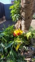 orquidea na ana amarela