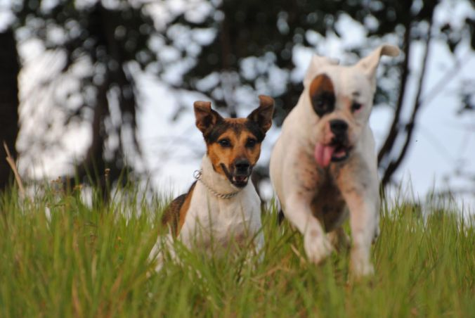 Cães CORRRENDO adorei esta foto