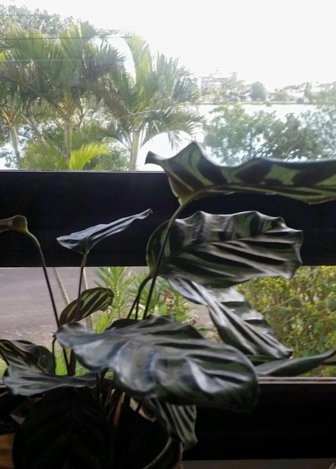 mais planta planta e lagoa gosteiiiii