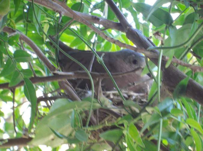 passarinho no ninho olhando