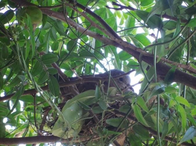 passarinho no ninho
