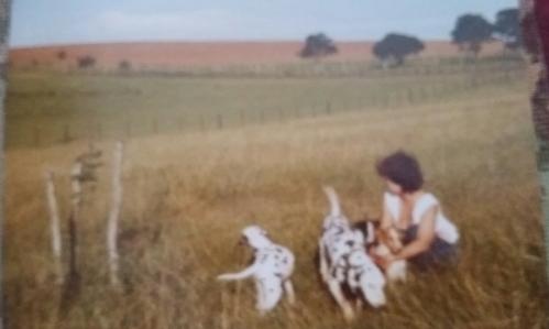 na fazenda com os cães