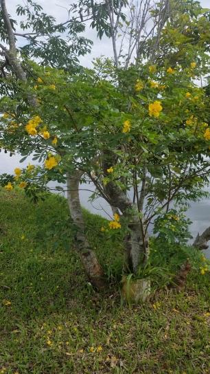 arvore com flores amarelas