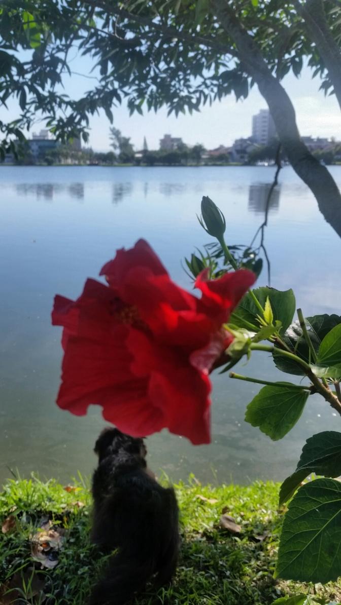 FLOR e ÔNIX na lagoa