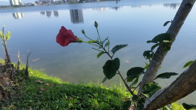 outro angullo da flor da lagoa