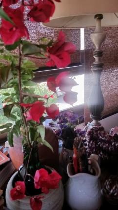 foto de flres minhas bonita