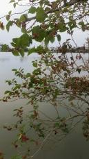 amoras na lagoa 11 de setembro frutinhas