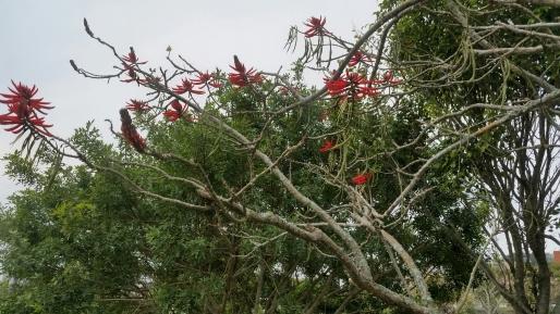 as flores vermelhas da praça eu gosto