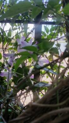 orquídeas e jasmim