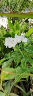 flores brancas com recorte