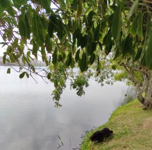 onix na lagoa