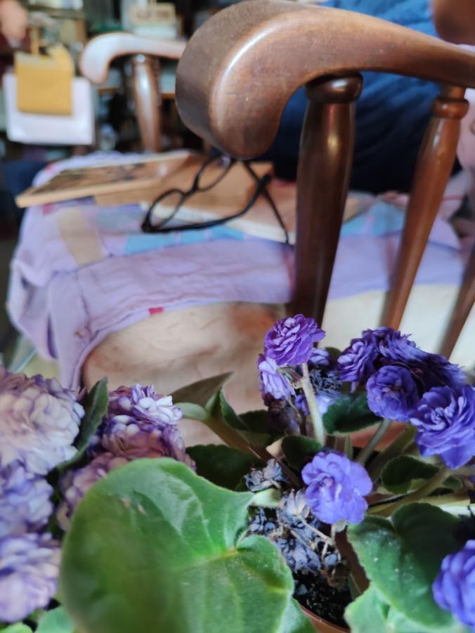 violetas 33333