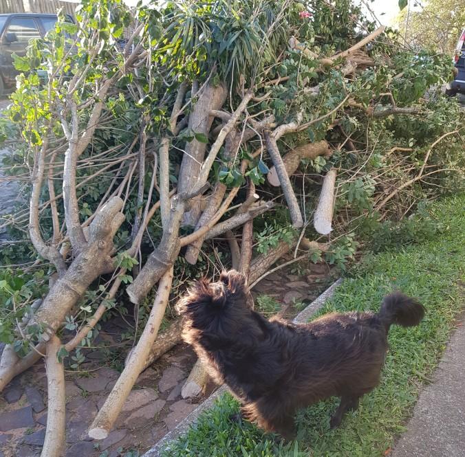 árvore caida e surpresa da Ônix.jpg