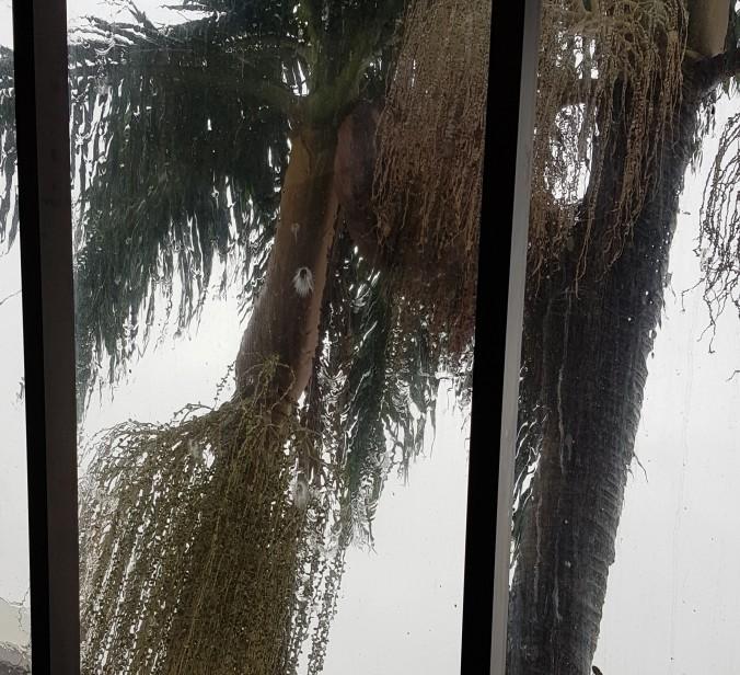 janela coqueiros mais perto frente do predio pela janela.jpg